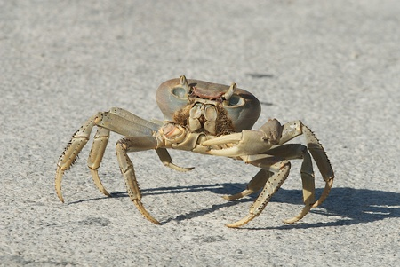 Land Crab in the Sun