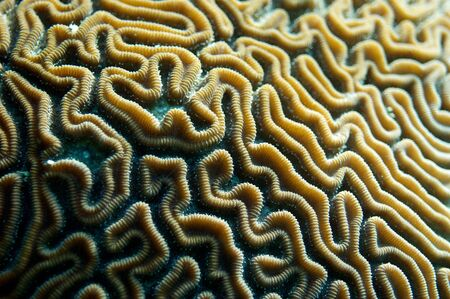 grooves: Grooves of a brain coral