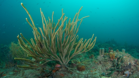 reef fish: Soft coral on a reef in south Florida.