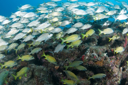 On a sixty foot reef in South Florida
