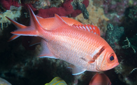 On a sixty foot reef in Palm Beach County, Florida