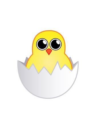 broken eggs: Little newborn chick in the egg