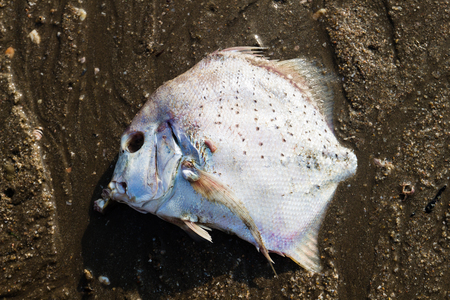 fish die with sand on the beach  from Thailand  photo
