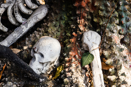 human bone and skull in the temple  in Thailand . photo