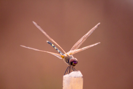 dragonfly with last light in the garden at thailand. photo