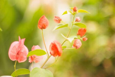 Paper flower in garden at thailand photo