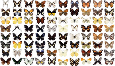 80 different butterflies