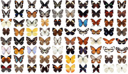 exotic butterflies: 80 different butterflies