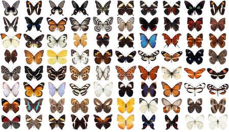 morpho: 80 different butterflies