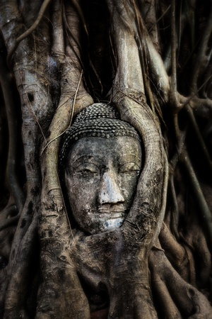 thailand s landmarks: Buddha head   Tree of buddha Site  Buddha head   Tree of buddha is located in The Historic City of Ayutthaya, Thailand   Ayutthaya Founded c  1350, Ayutthaya became the second Siamese capital after Sukhothai