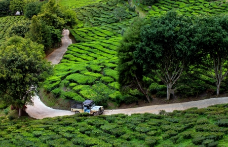 cameron highlands: Car crosses country road in tea plantation, Cameron highlands, Malaysia Stock Photo
