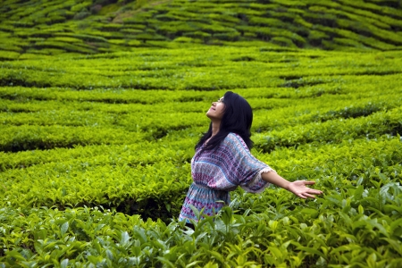 Young happy woman spreading hands with joy in tea plantation, Cameron highlands, Malaysia photo