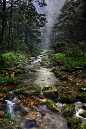 Forest stream  in China, Zhangjiajie