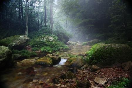 Forest stream  in China, Zhangjiajie UNESCO World Heritage Site