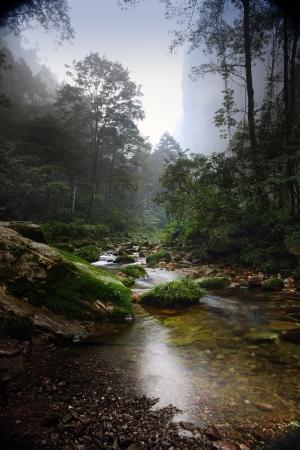 Forest stream  in China, Zhangjiajie UNESCO World Heritage Site.