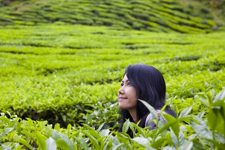 cameron highlands: Happy woman in nature(tea plantation), Cameron highlands, Malaysia. Stock Photo