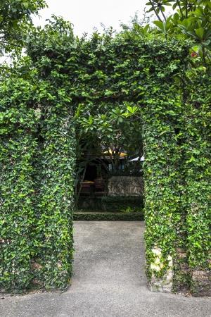 panteleimon: Beautiful green tree door  Brick door with Beautiful green tree and white sky