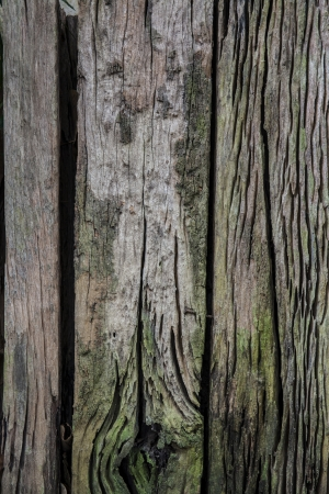 Wood with green moss - texture background - wood texture  Seamless texture of old wood with cracks and green moss  photo