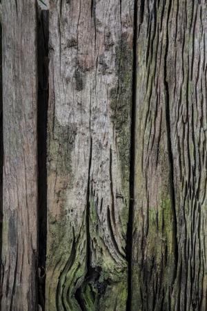 wheelhouse: Wood with green moss - texture background - wood texture  Seamless texture of old wood with cracks and green moss