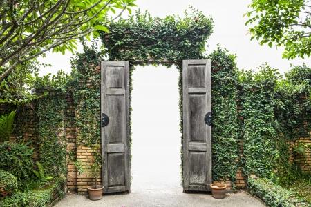 Beautiful green tree wall   door  Wooden Door with Beautiful green tree wall and white background  Stock Photo