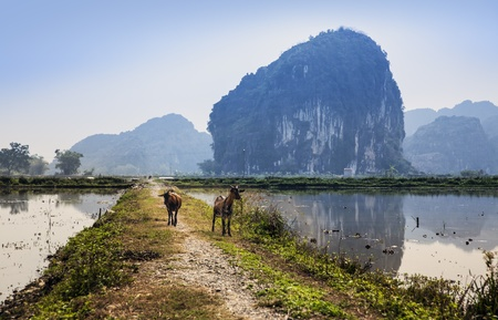 Country road with goat in Ninh Binh, Vietnam  Ninh B�nh is a province of Vietnam, in the Red River Delta region of the northern part of the country with tourist attractions  photo