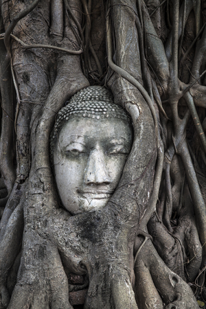 nakhon: Head of Buddha image in the tree, Ayutthaya, Thailand  Unesco World Heritage  - Site Wat Mahathat is located in The Historic City of Ayutthaya, This is Unesco World Heritage Site