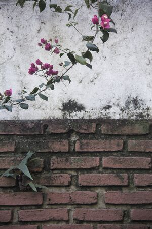 Flowered Large Wall