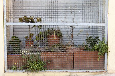 garden of Plants that seem trapped behind a cage on a city