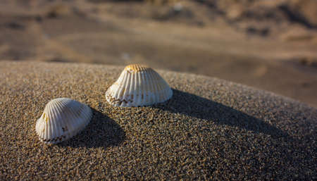 Two shells resting on a small sand dune on the seashore at sunset Stock Photo