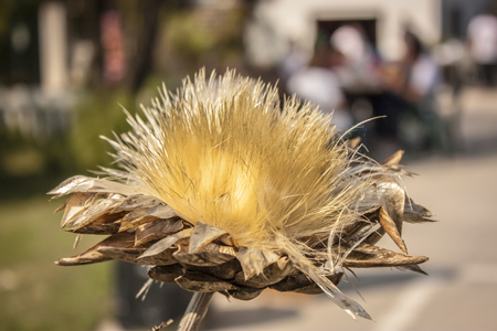 resumed: A typical flower of the northern Italian plains resumed in the foreground with the background blurred.