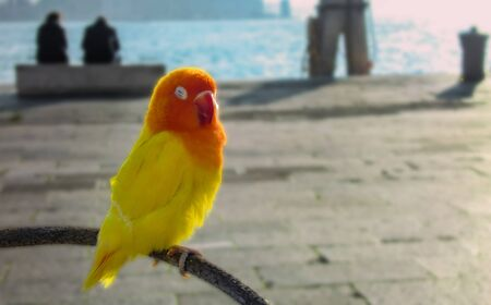 Small parrot perched on a bough in St. Mark's Square in Venice. Imagens - 76750194