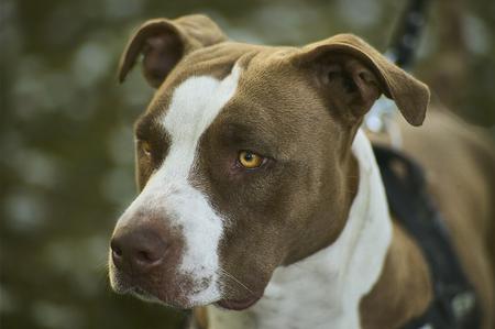 Muso di un cane rottweiler in primo piano con altissimo livello di dettaglio. Un esemplare giovane ed affascinante.