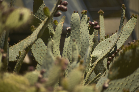 visible: Detail of some cacti in which the details and details of the needles are very visible. Stock Photo