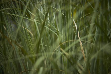 Textuur van Close-up van een massa gras in de weelderige groei in de de lenteperiode.