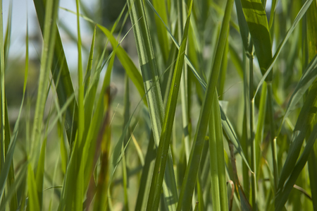 enhances: Texture of herringbones photographed with great detail that enhances the veins, shades and colors. Blades of grass. Stock Photo