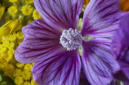 Detail of the purple petals and filaments of a purple flower, detail and detail visible thanks to the macro shooting. Фото со стока