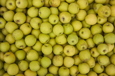Green apple texture: lots of green apples collected in a bins at the time of their collection in the production phase. Apples storage.
