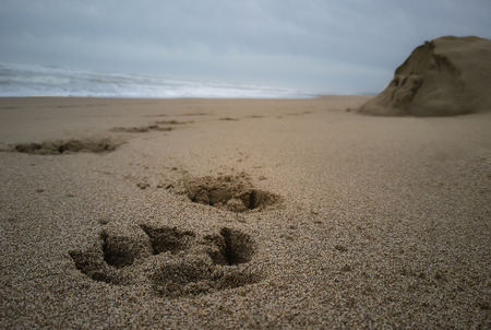 Imprint of a dog's paw on the sand of a beach on a cloudy day
