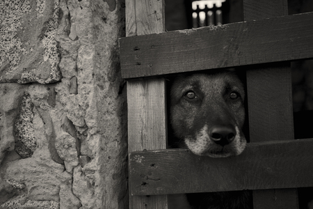 Young dog looking through the grate of a cage where he is locked up: the suffering of someone who is deprived of his freedom at the hands of those who can not respect the rights of others.