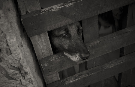 Dog gazing out of his cage with the hope in his eyes that one day he could breathe the air of freedom again.