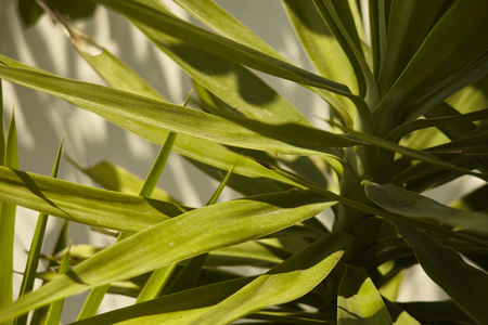 Long leaves of a particular type of palm tree illuminated by the light of the setting sun. Banco de Imagens