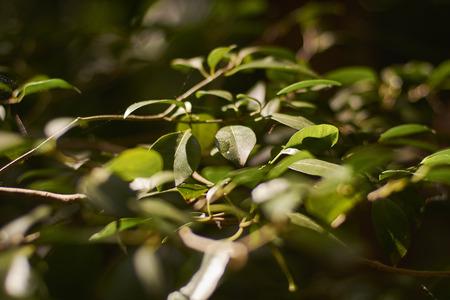 Tropical vegetation detail