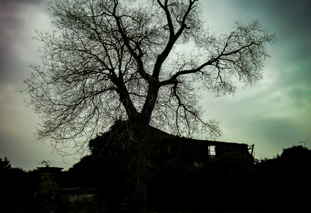 Beautiful old tree backlit on a winter day with cloudy skies Stock fotó