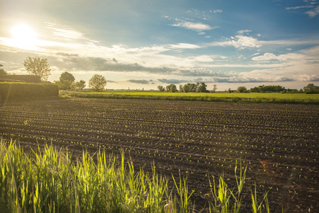 Countryside landscape with crops of freshly sown corn from northern Italy, illuminated by a splendid sunset Фото со стока