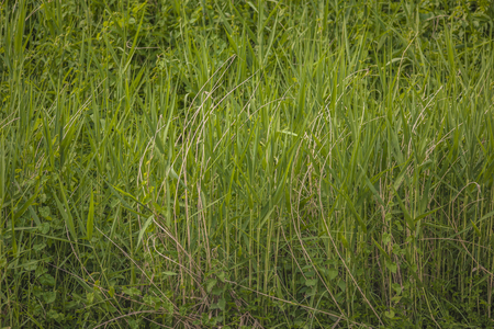 Texture of blades of grass at springtime in a lush meadow Banco de Imagens