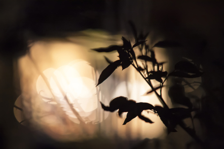 Silhouette of some leaves in backlight with a nice bokeh background
