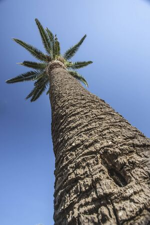 Palm tree from above with sky background