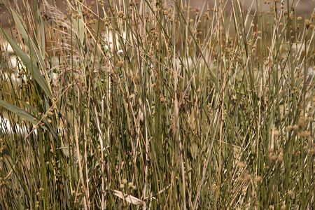 Grass texture in wild nature 写真素材