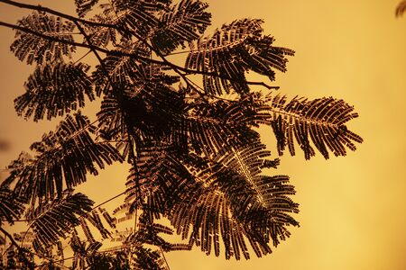 Fern silhouette at sunset with orange background