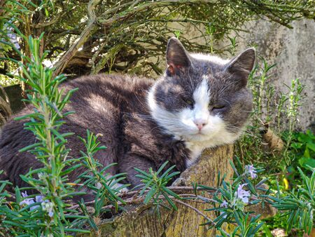 Cute grey Cat resting in garden in a spring sunny day